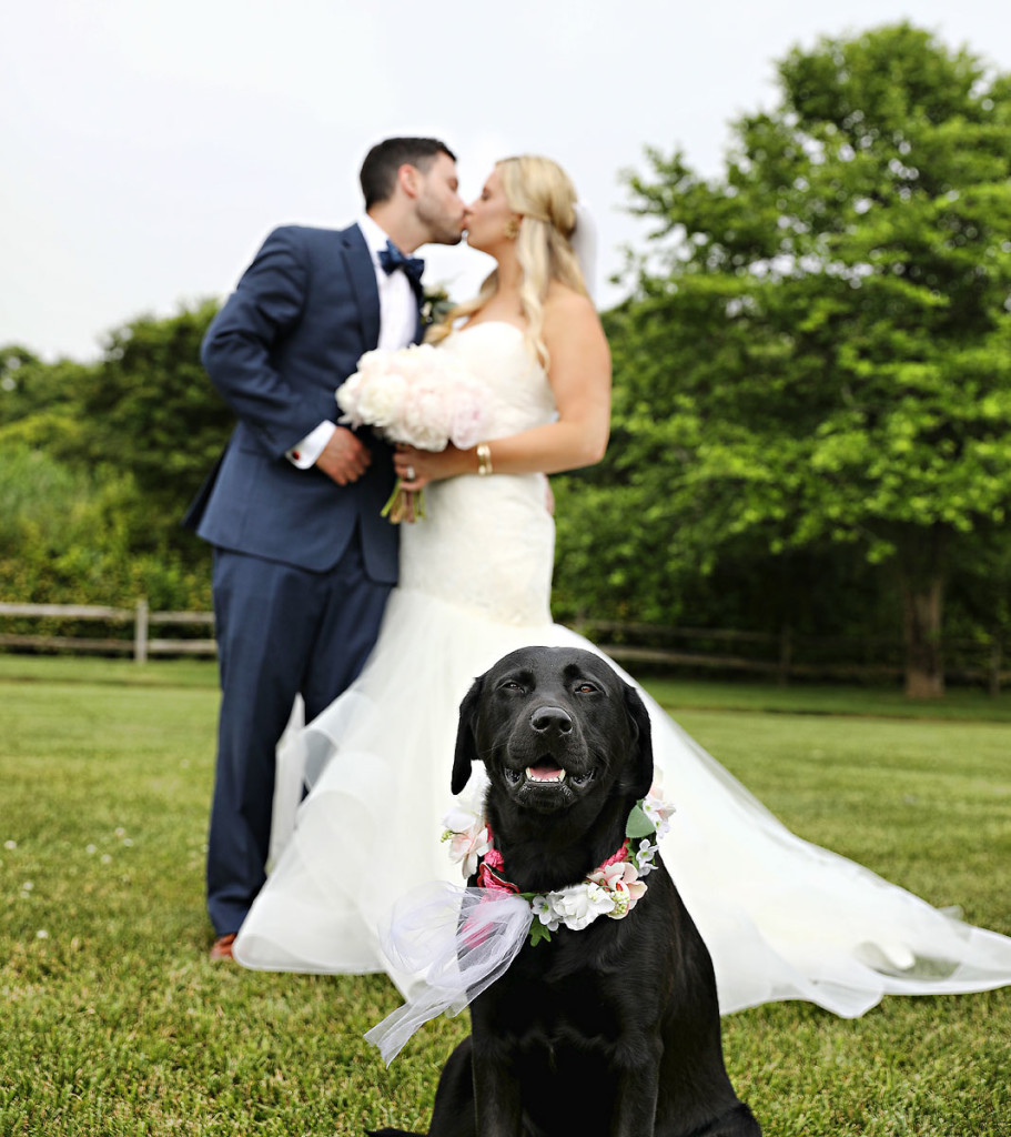 dog-at-the-wedding-02